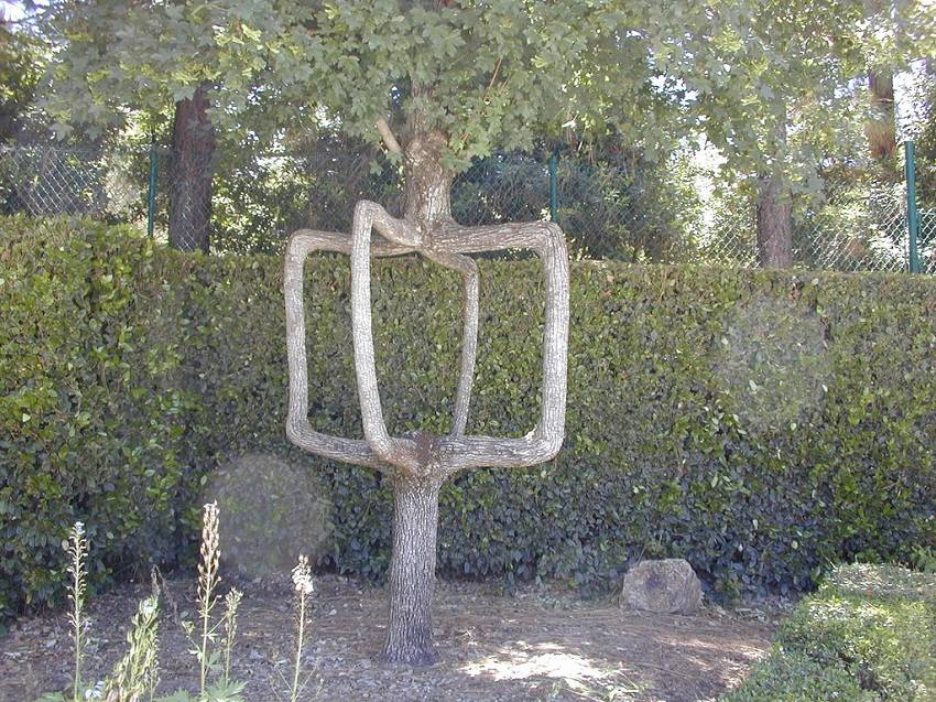 04-Axel Erlandson tree park
