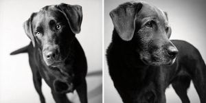 dogs-getting-older-11-CORBET — 2 YEARS AND 11 YEARS