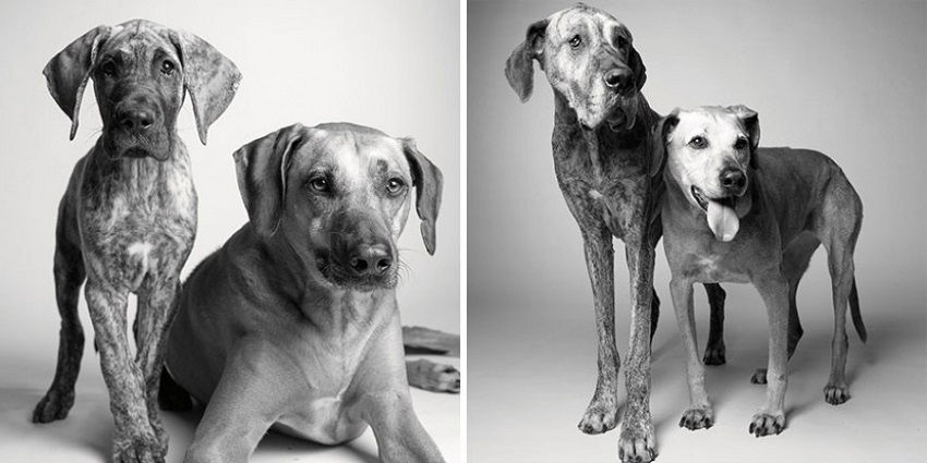 dogs-getting-older_5