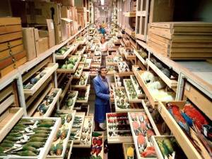 A View inside Hidden Smithsonian's Archives