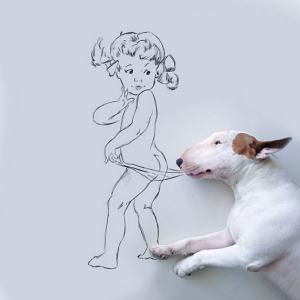 Jimmy Bull Terrier 7