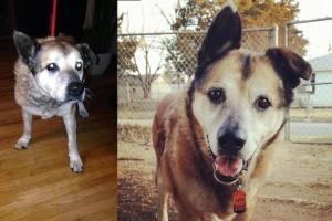 Adopted dogs - Herschel