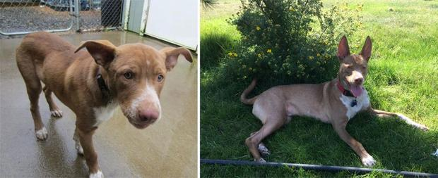 Adopted dogs - Jasper