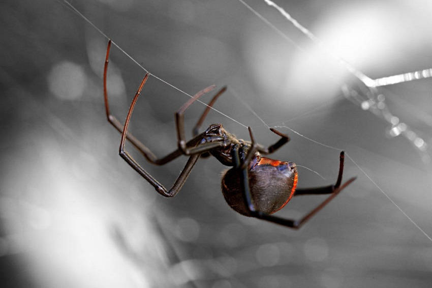 Get Rid of Spiders at Home