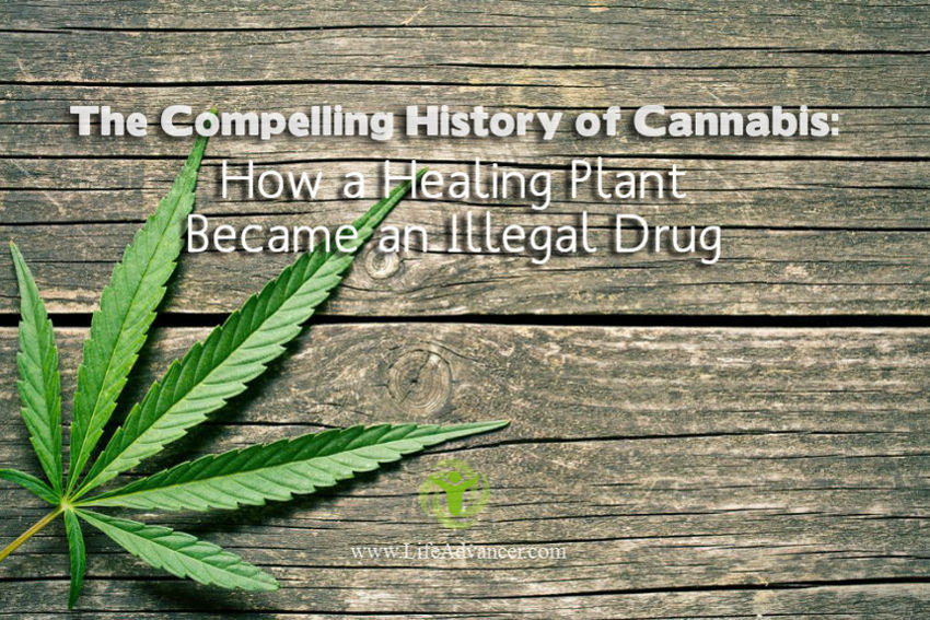 The Compelling History of Cannabis: How a Healing Plant Became an Illegal Drug