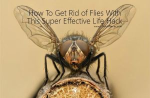 How To Get Rid of Flies life hack