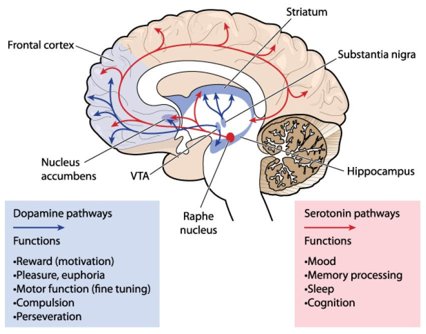 Neurobiology of depression: an integrated view of key findings