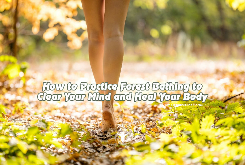 How to Practice Forest Bathing