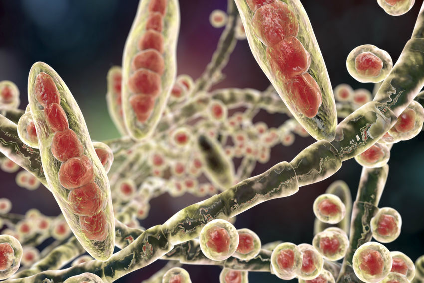 Fungal Rash Types, Causes, Symptoms and Science-Backed Natural Treatments