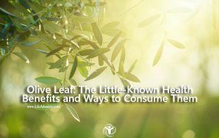 Olive Leaf