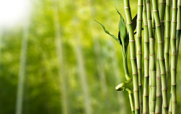 Benefits of Bamboo That Make It a Great Material for Going Green