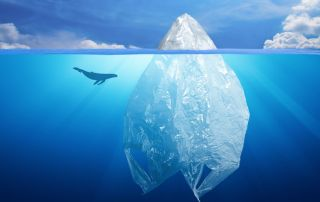5 Unexpected Ways Plastic Pollution in the Ocean Affects You Daily