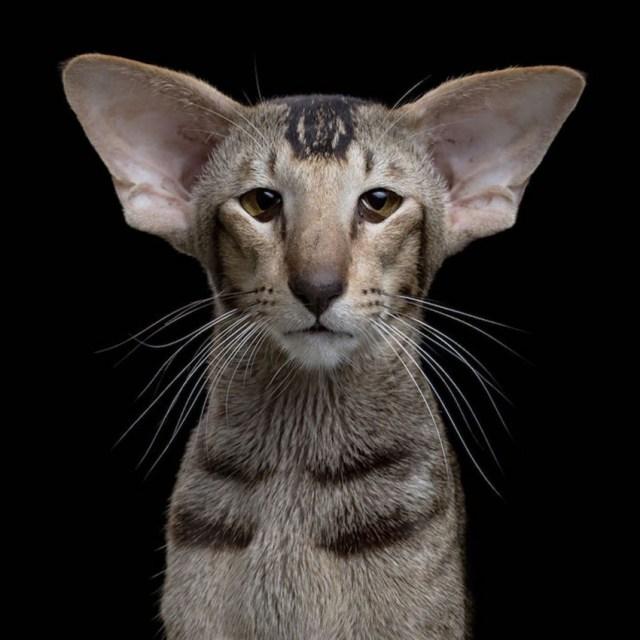 Floppy-eared Cat