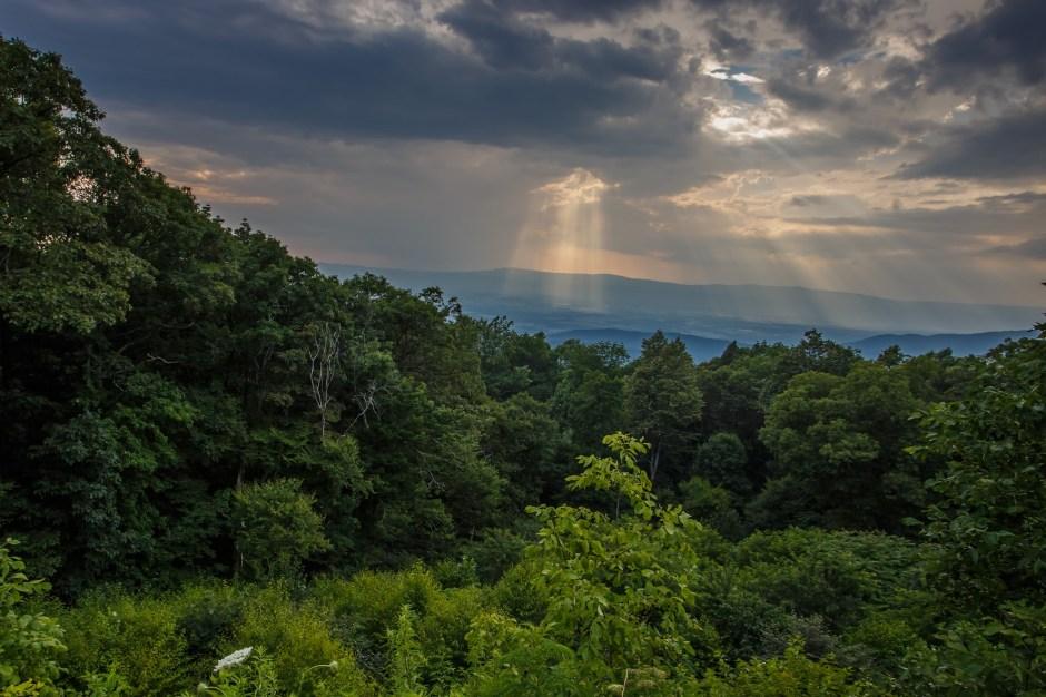 The Oaks Overlook