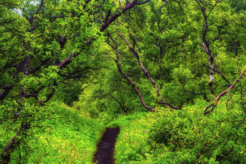 Landmannalaugar – Thórsmörk Hike (Day 4)
