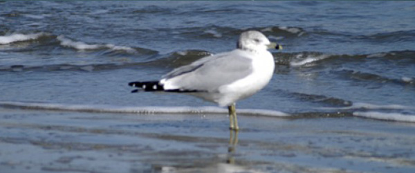 Read more about the article Ocean Birds