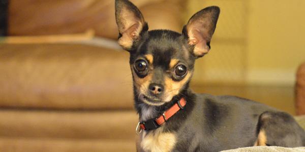 For Gracie: Godspeed, Tiny Puppy