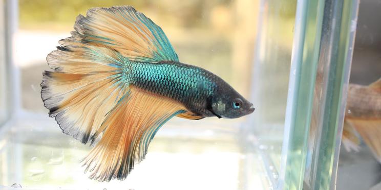 Fish: Phase One