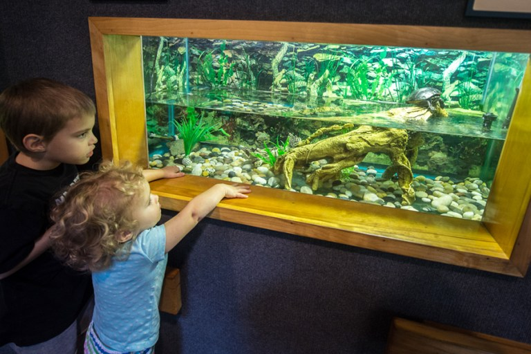 Two kids look at a turtle swimming in a tank