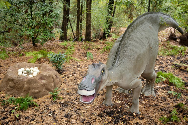 A lifesize model of a Maiasaura dinosaur stands over her nest of eggs.