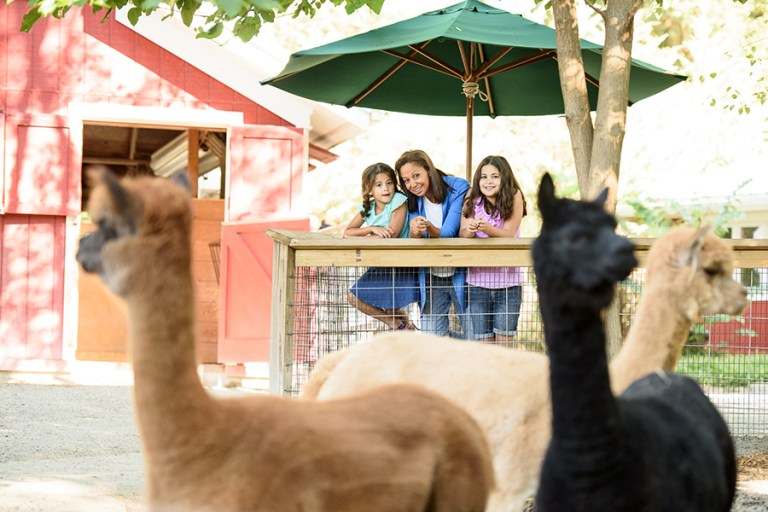 A woman and two girls observe a pack of alpaca in the Farmyard.