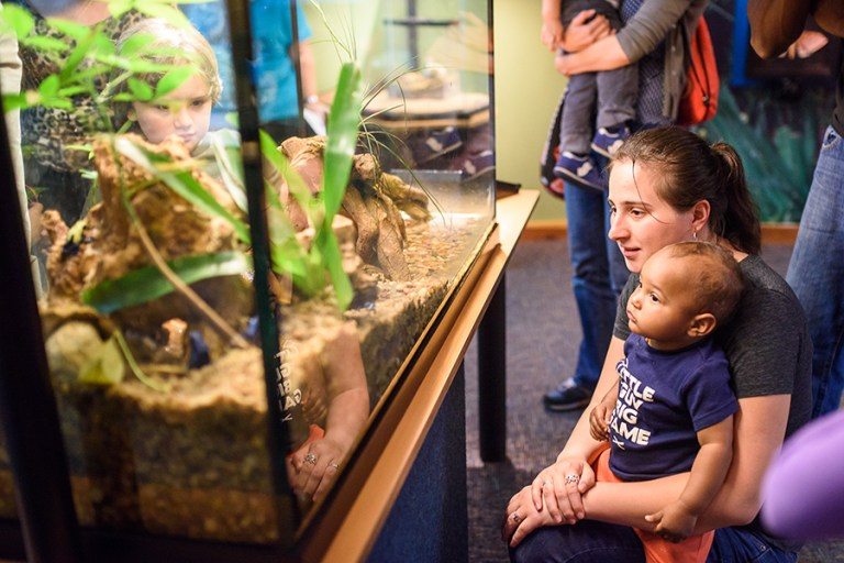 A woman and child look at a tank holding poison dart frogs.