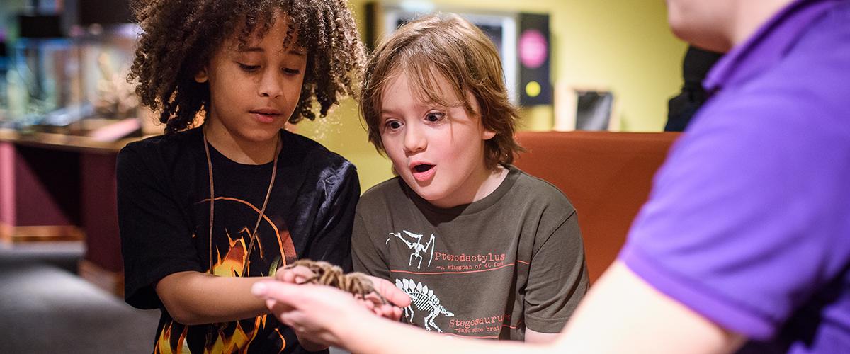Two kids look in awe at tarantula