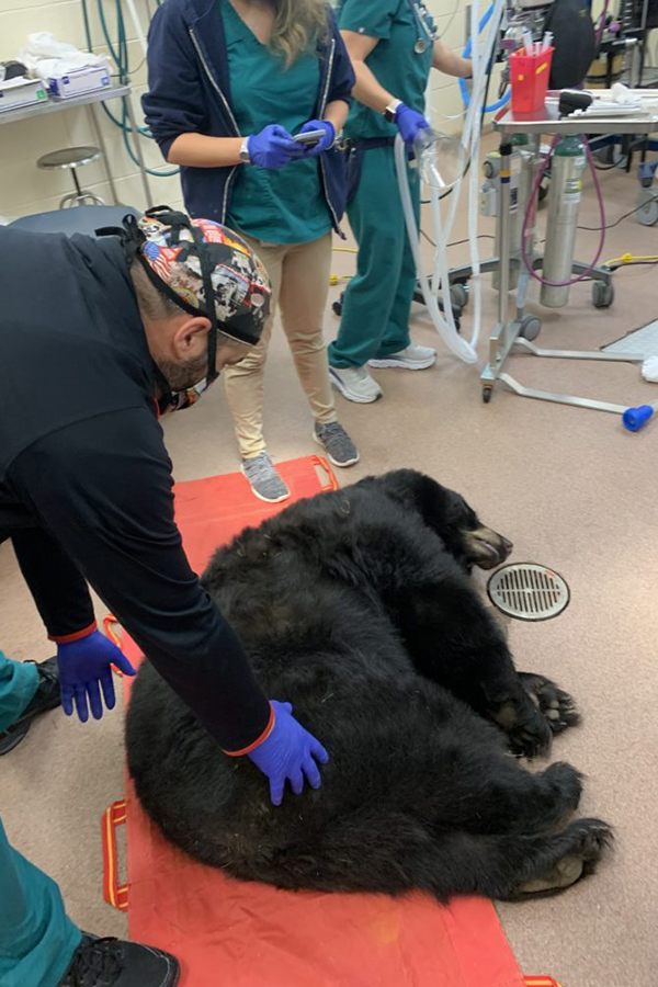 Vet centers bear on red mat
