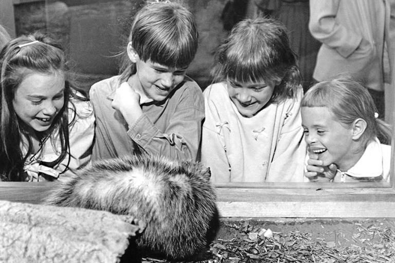 Four children observe a skunk in its habitat in Carolina Wildlife.
