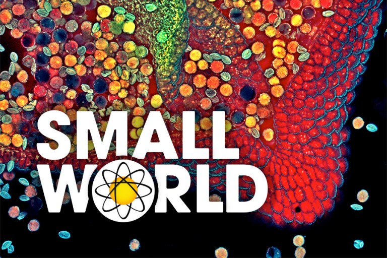 Small World header