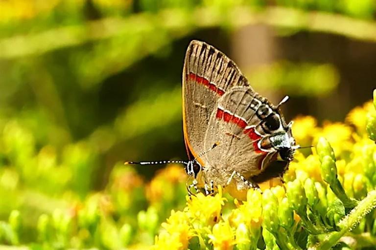 Wander Away pollinator