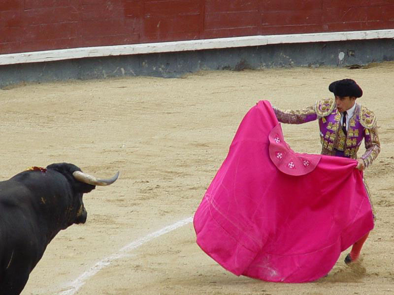 Bull Fighting
