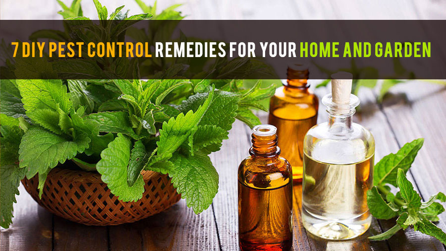 7 diy pest control remedies for your home and garden. beautiful ideas. Home Design Ideas