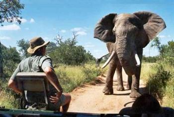 ranger south africa