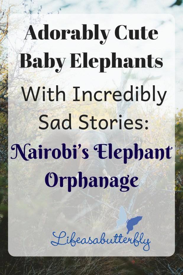 Adorably Cute Baby Elephants With Incredibly Sad Stories: Nairobi's Elephant Orphanage