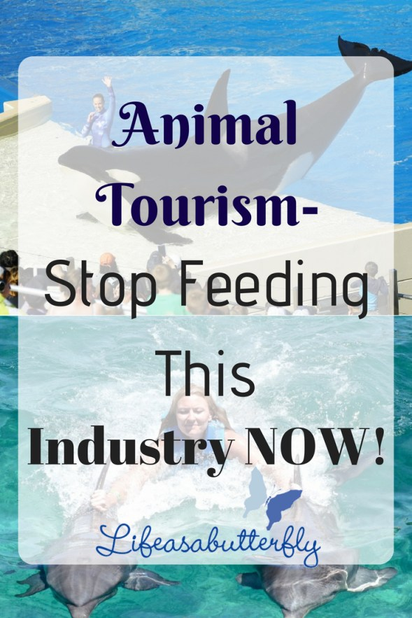 Animal Tourism- Stop Feeding this Industry NOW!
