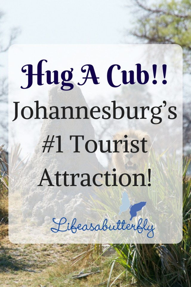 Hug a cub!! Johannesburg's #1 tourist attraction!