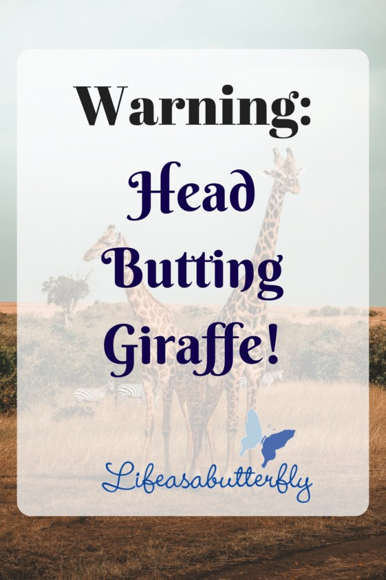 Warning:Head Butting Giraffe!