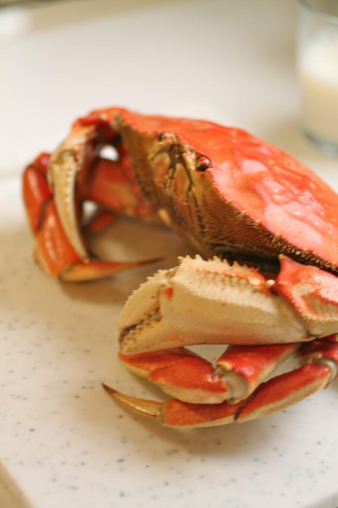 A whole cooked crab.