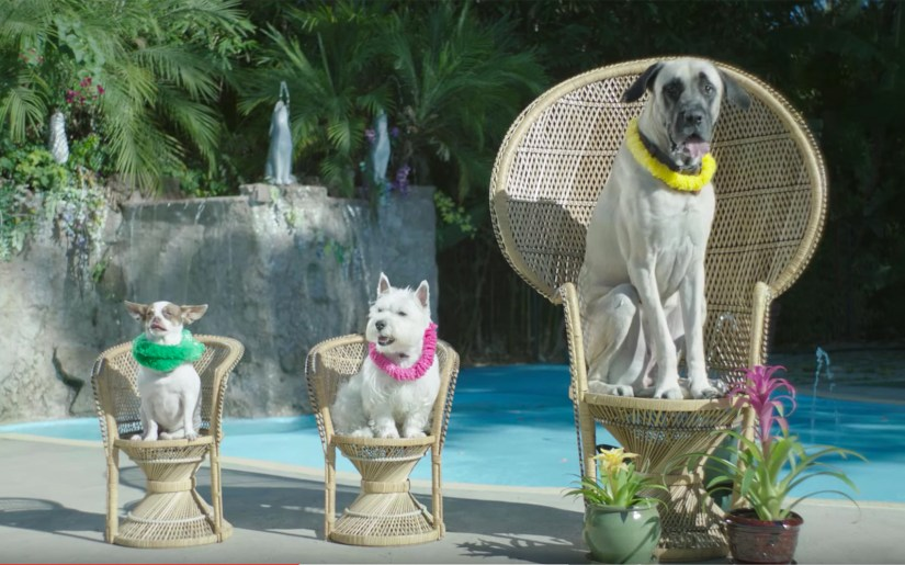 dogs visit day spa