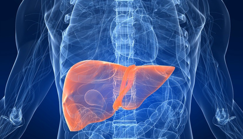 Liver Facts and Hep C, Life Beyond Hepatitis C