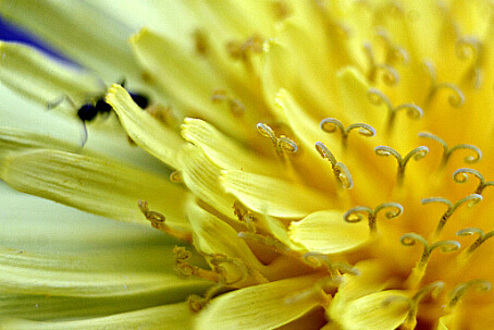 Get Closer With Macro Tubes ~ CCBG Photography Challenge ~ Life Beyond the Kitchen