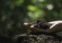 bakterie glebowe
