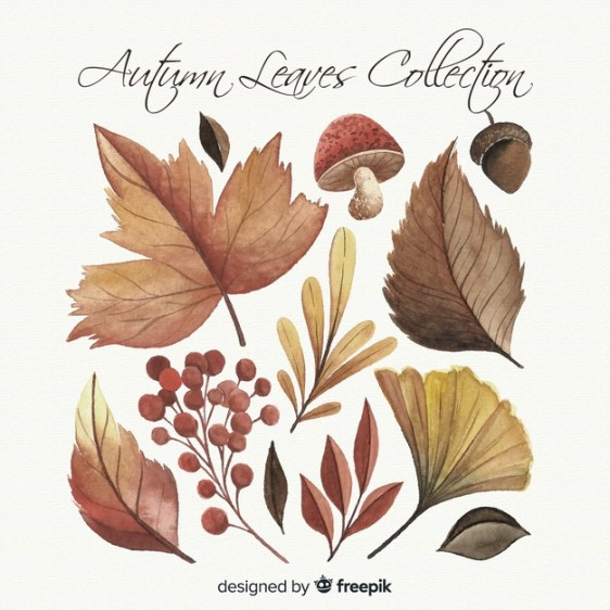 watercolor-style-autumn-leaves-collection