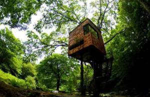 tree-house-Japan
