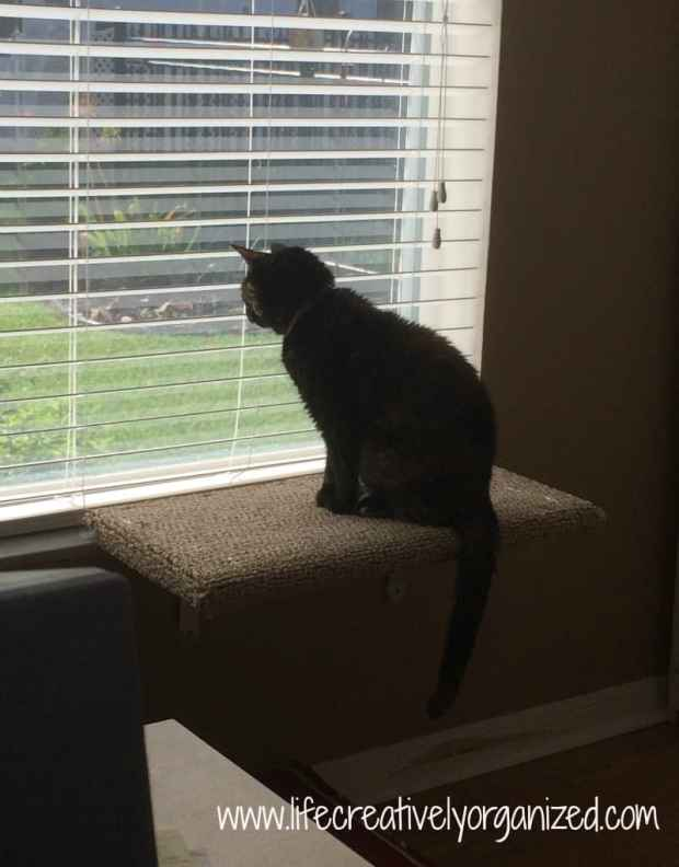 Cats are people, too! DIY window cat perch.
