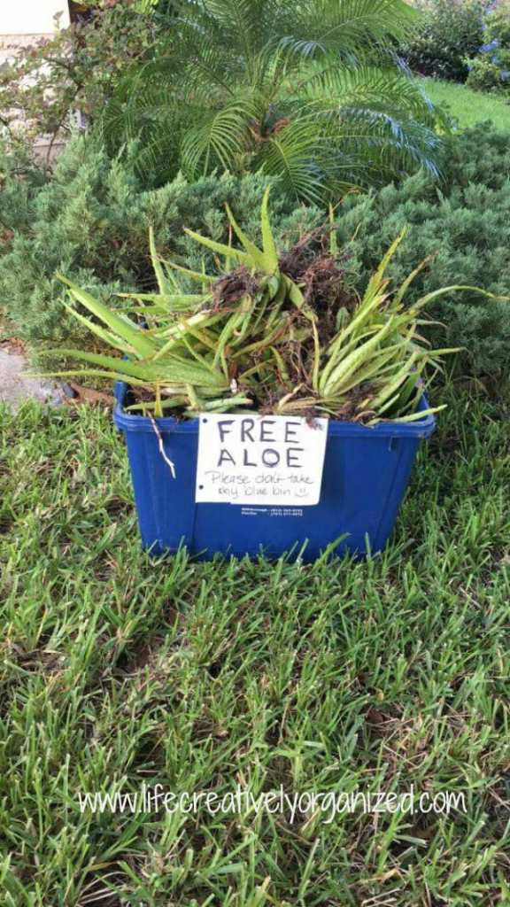 Plants taking over your space but you hate to throw them away? Be neighborly - share plants! A win-win if you do a plant exchange & get new ones, too!