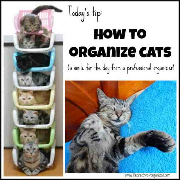 Because I'm a professional organizer, it's the first of April, and I'm feeling a bit silly today, I will share the best ways to organize cats. Enjoy!