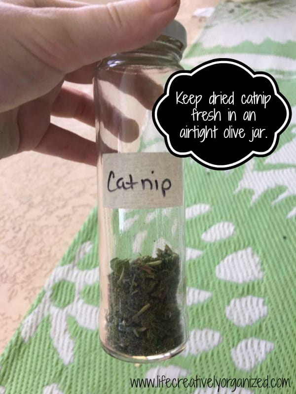 Kitty tip: How to grow and dry catnip. Keep dried catnip fresh in an airtight olive jar.