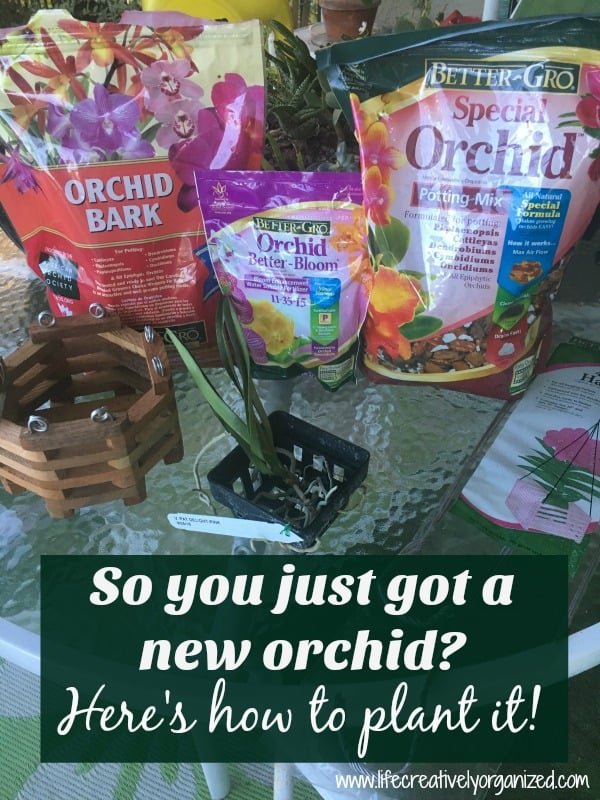 Plant new orchids. This is my first orchid and so I wanted to plant it correctly since I had heard they are hard to grow. Here are the steps I used.